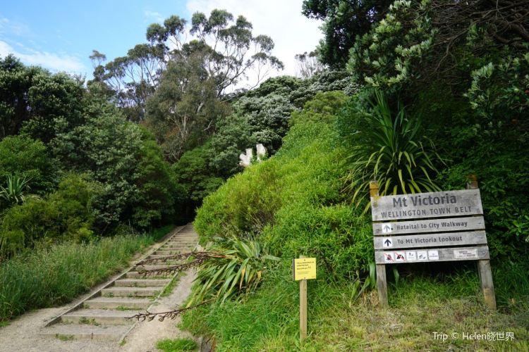 Mount York Lookout2