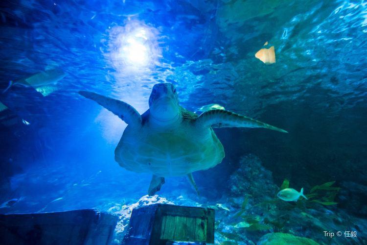 Kelly Tarlton's Antarctic Encounter & Underwater World3