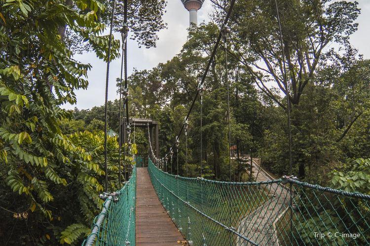 咖啡山森林保護區1