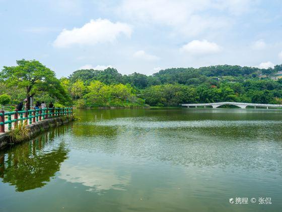 Green Grass Lake