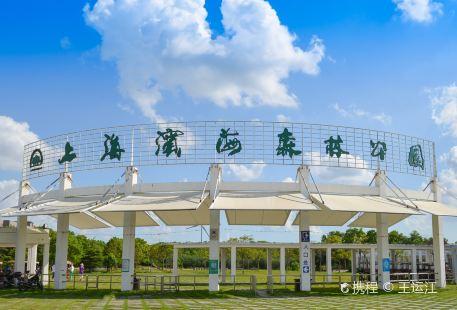 Shanghai Binhai Forest Park