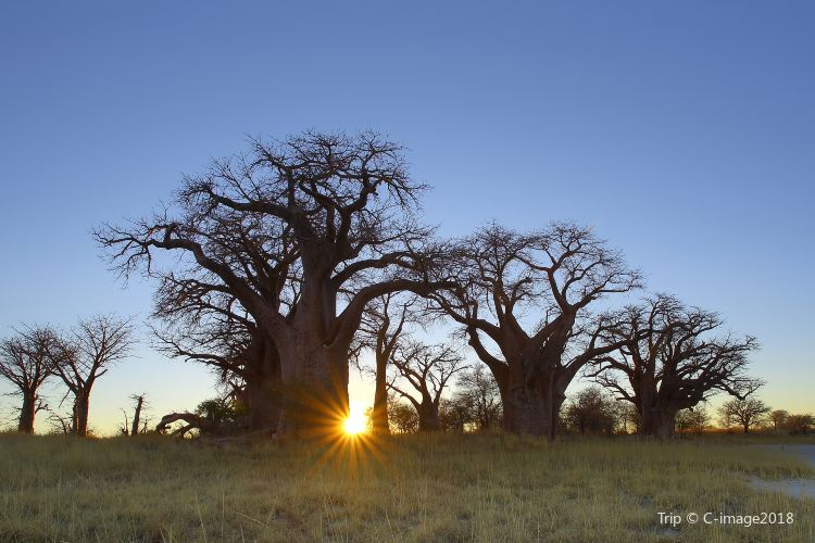 Baines Baobabs1