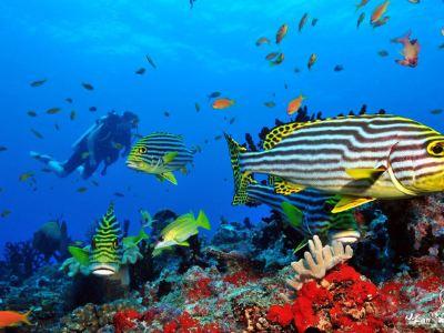藍色潛水·馬爾地夫