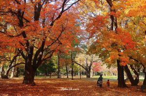 Sapporo,unforgettableexperiences