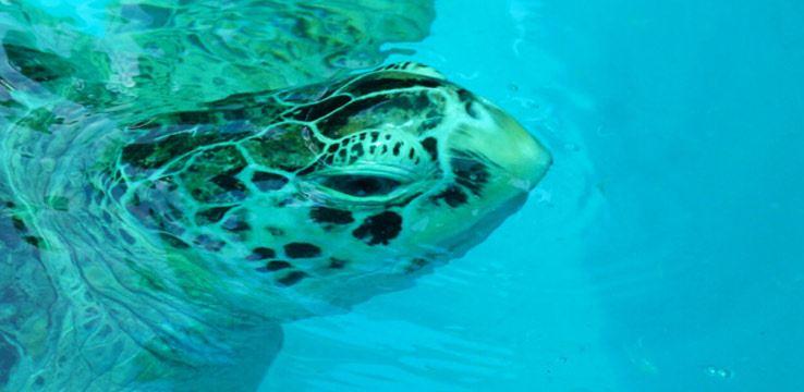 Sea Turtle Conservation Centre1