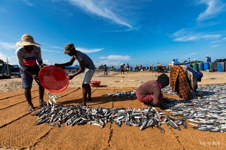 Negombo Central Fish Market3