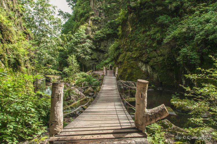 Heilongjiang Forest Botanical Garden2