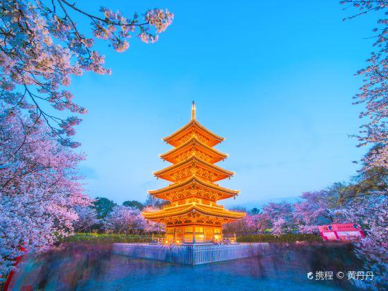 동후 벚꽃공원(동호 앵화원)