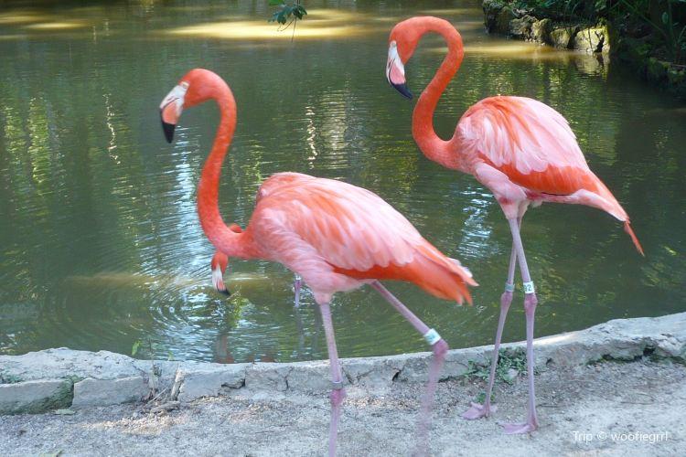 Rand Nature Centre - Bahamas National Trust1