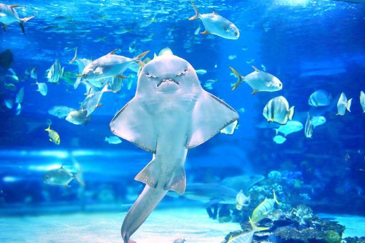 The Aquarium of the Pacific3