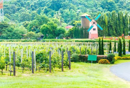 Silverlake Vineyard