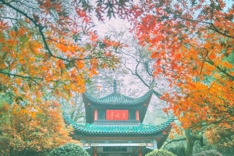 Autumn-Admiring Pavilion3