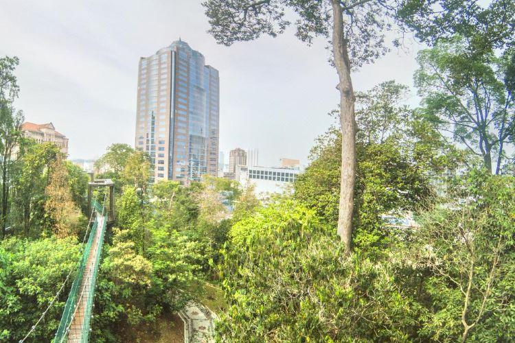 咖啡山森林保護區