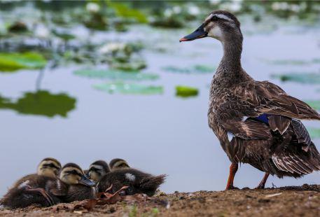 雙龍湖觀鳥園