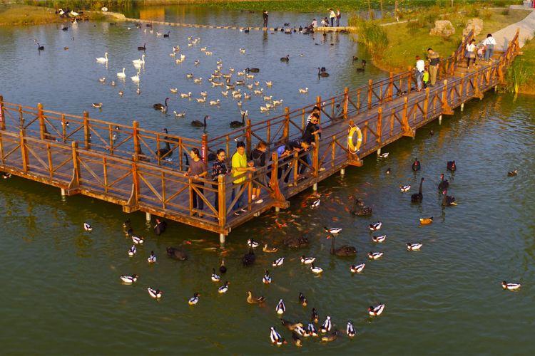 雙龍湖觀鳥園3