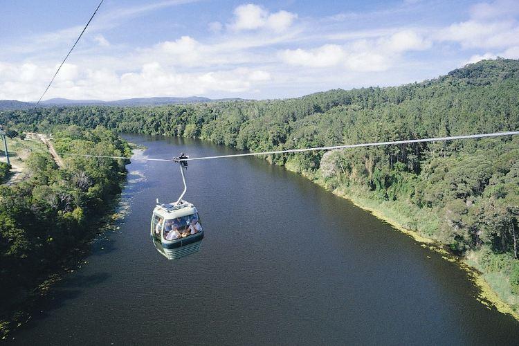 Skyrail Rainforest Cableway4