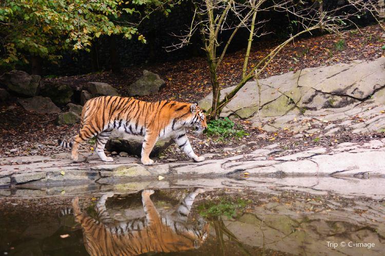 취리히 동물원3
