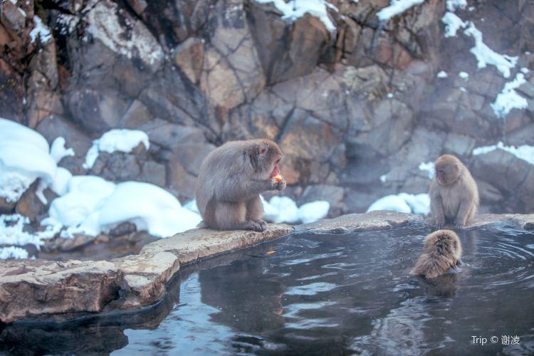 地獄谷野猿公苑2