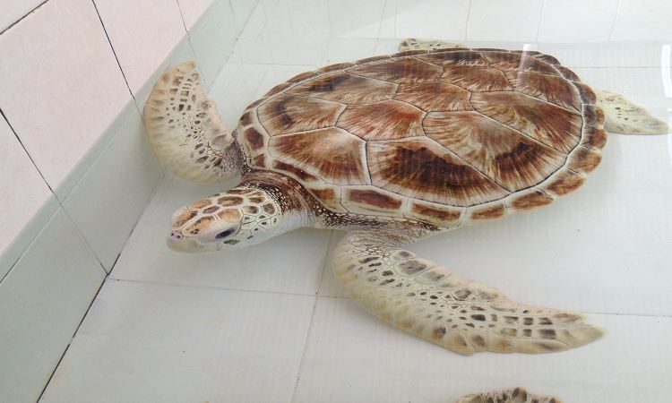 Turtle National Reserve Areas3