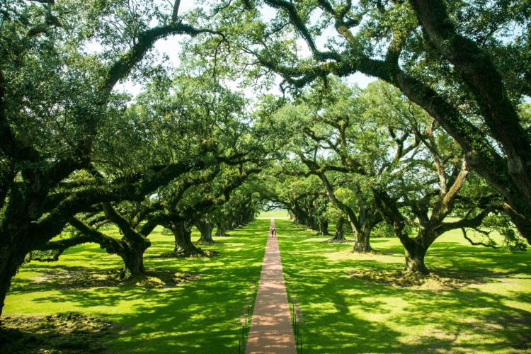 Oak Alley Plantation4