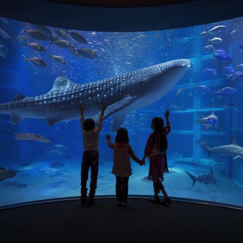 Osaka Aquarium Kaiyukan