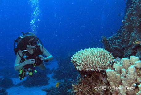 Sea Dancer Dive Center