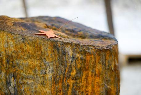 Petrified Wood Geopark