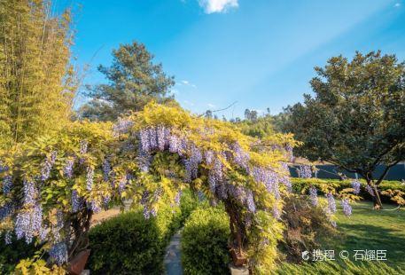 Myanmar Garden