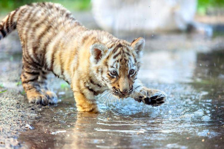 충칭 야생동물원
