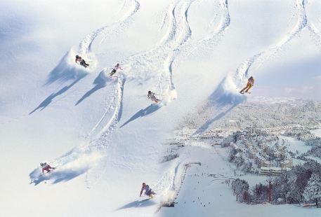 Yongpyong Resort Ski & Snowboard