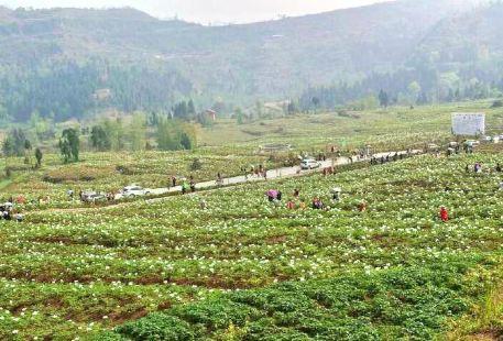 Qinba Plant Expo Park