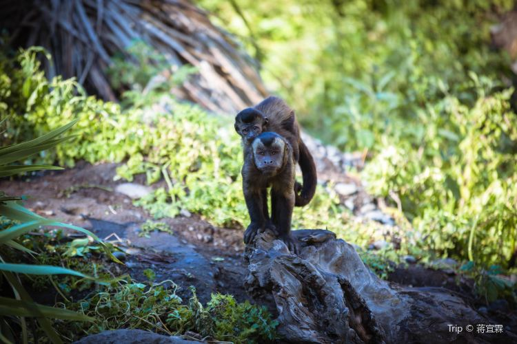 Willowbank Wildlife Reserve1