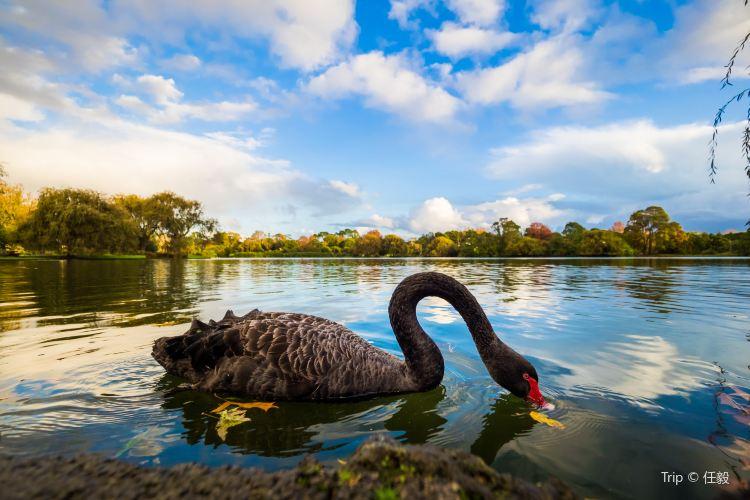 Western Springs Lakeside Park1