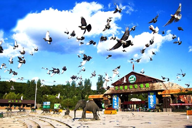 Shenyang Forest Wild Zoo1
