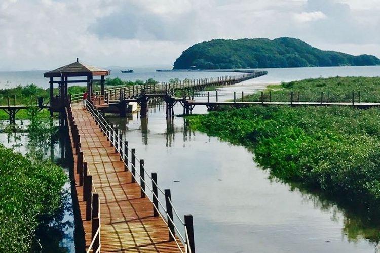 Hailing Island National Wetland Park of Mangrove Forest1