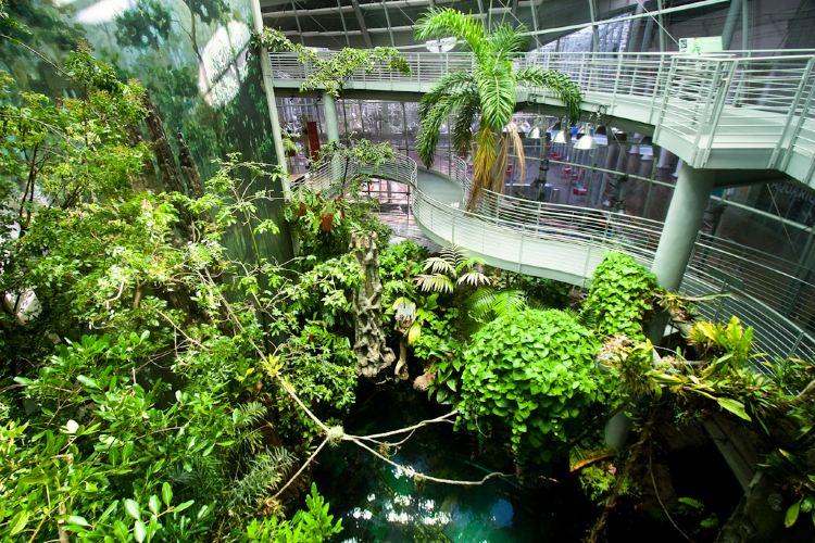 加州科學博物館4