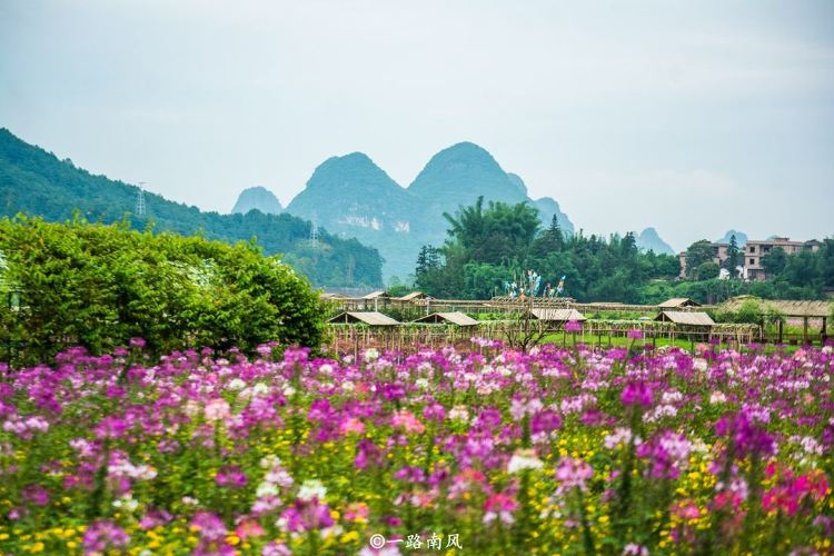 Huangyao Fairy Flower Lake4