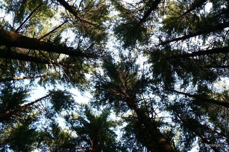 Pine Lake Park4