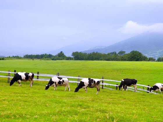 Chulu Ranch