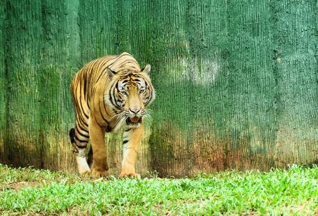 馬六甲動物園