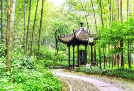 Yunqi Bamboo Trail