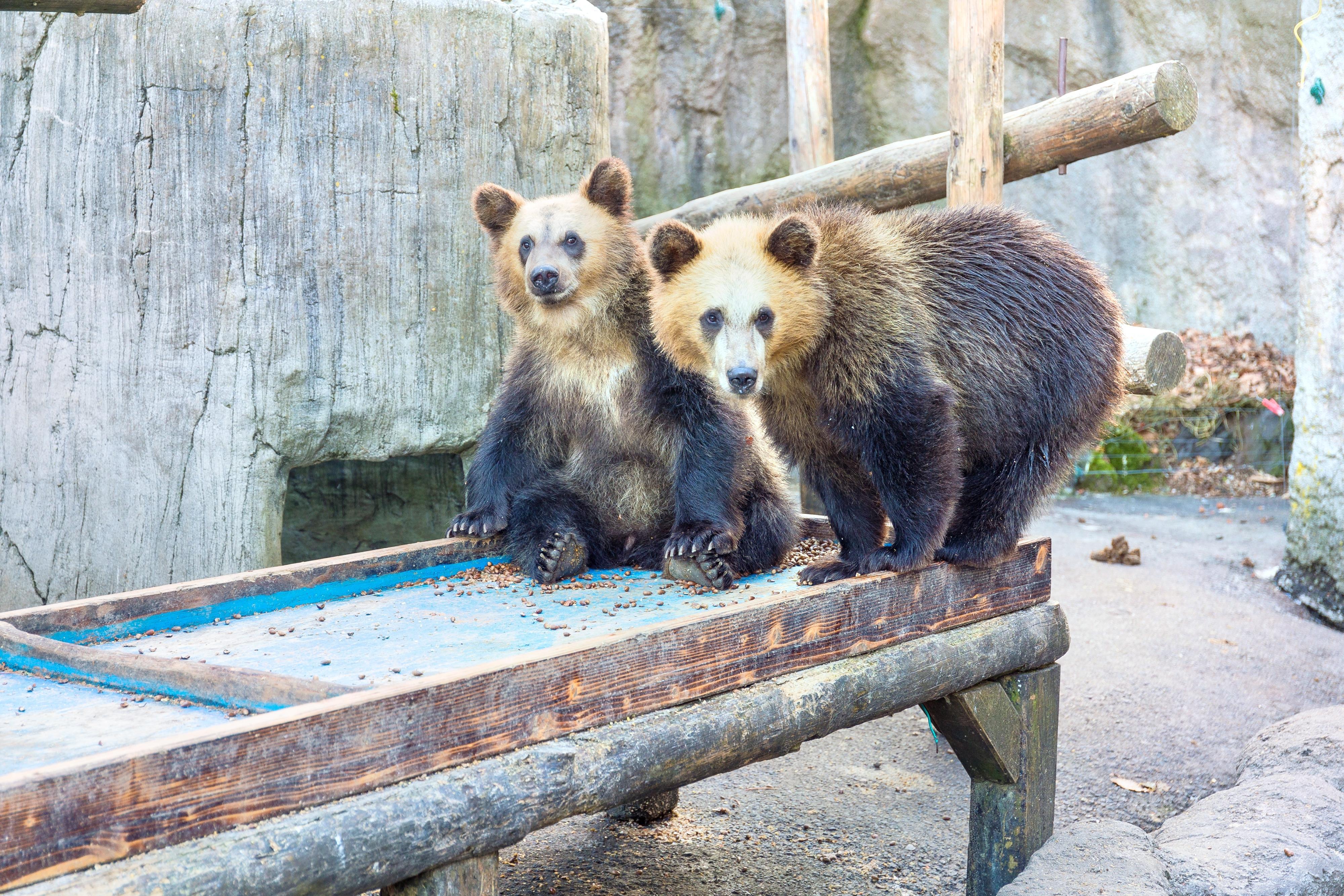 Showashinzan Bear Ranch