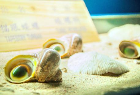 亞龍灣貝殼館