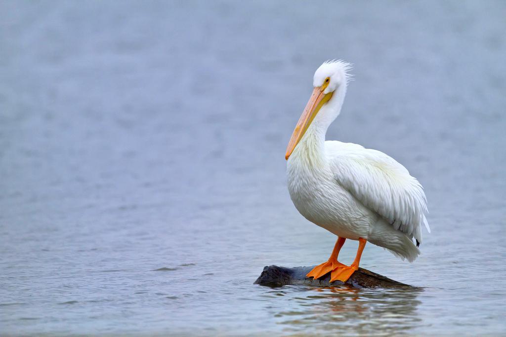 Edinburg Scenic Wetlands