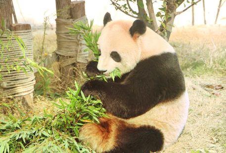 Suzhou Wildlife Park