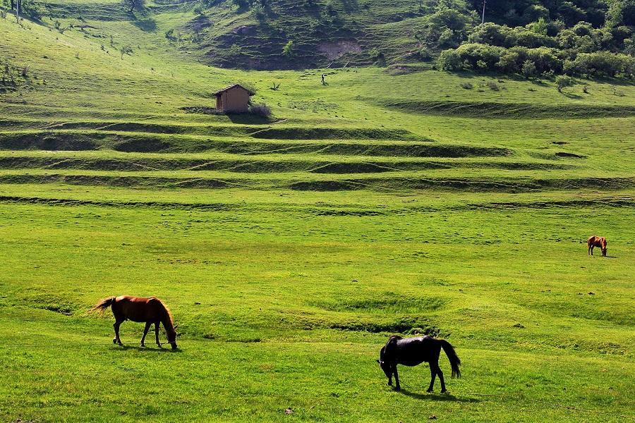 Guanshan Grasslands