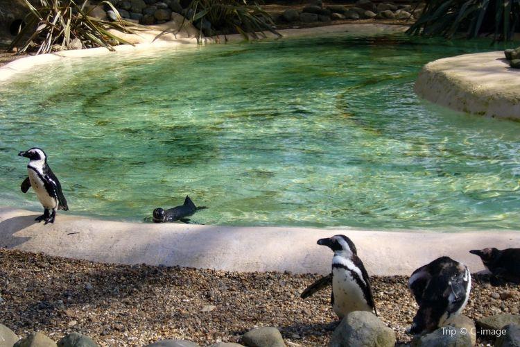 런던 동물원4