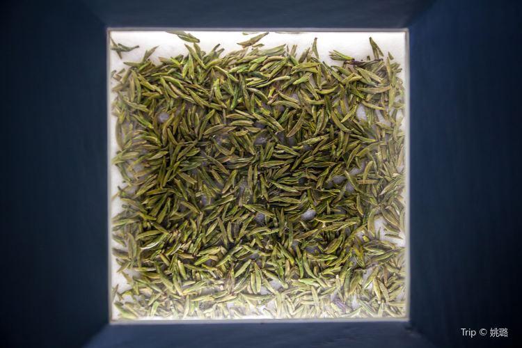 中國茶葉博物館3