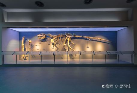 Chongqing Museum of Natural History  (New Hall)