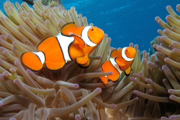 凱恩斯水族館3